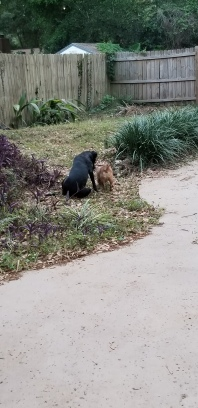 Bailey and Hazel playing outside